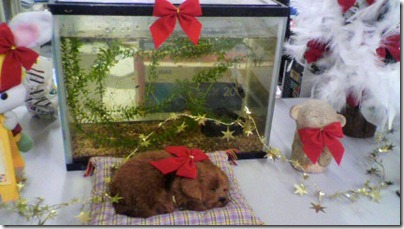クリスマス2010